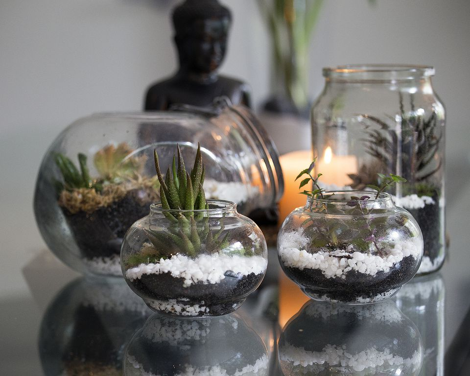 terrariums plants in glass containers