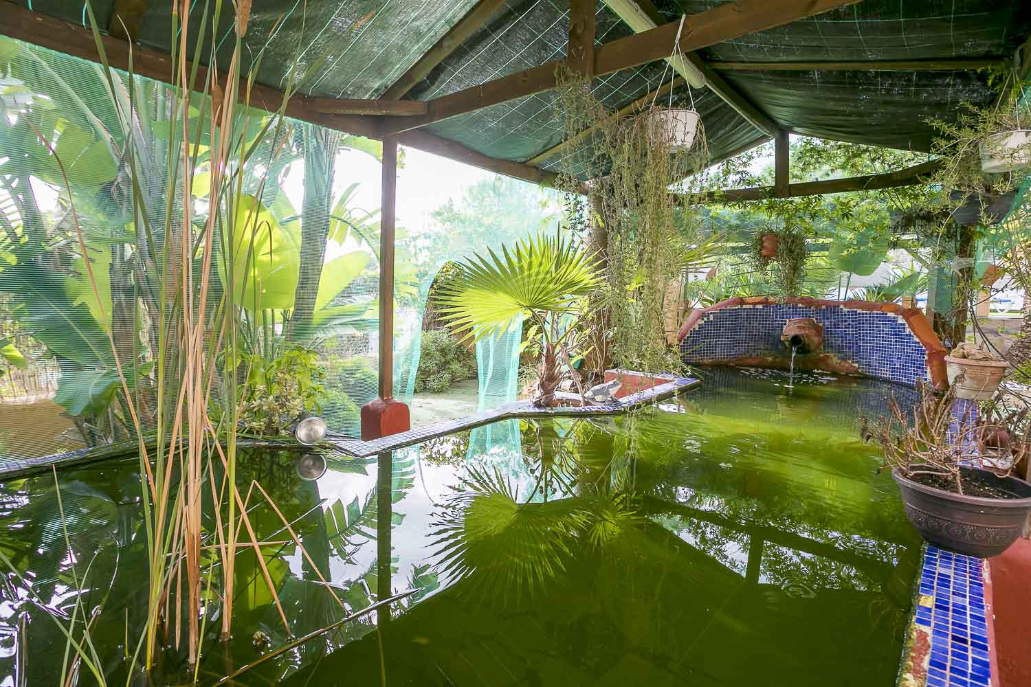 Water pond in a rental house of Ibiza