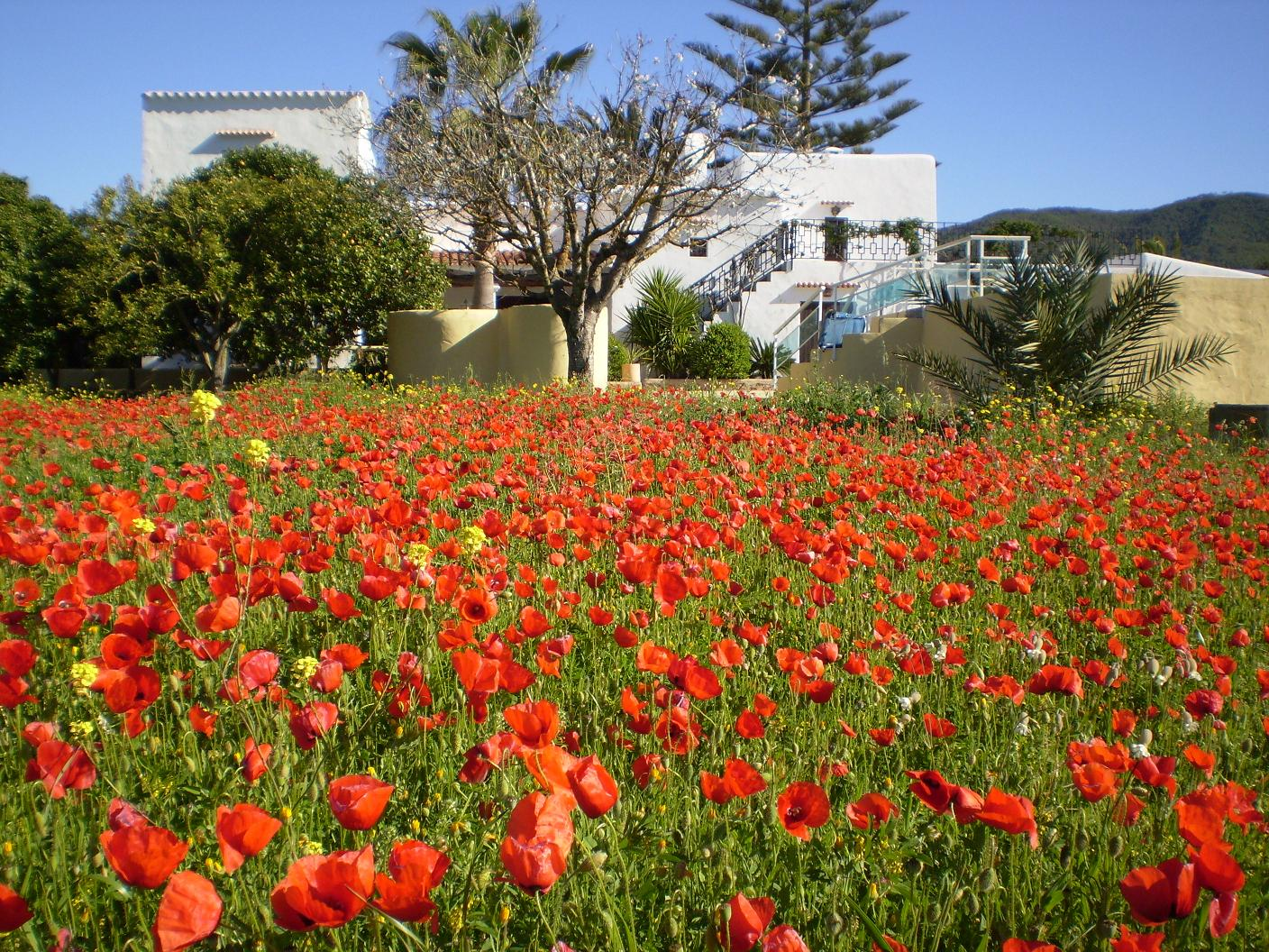 Garden with poppies
